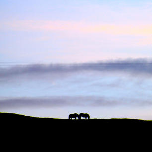 Ponies on the hill