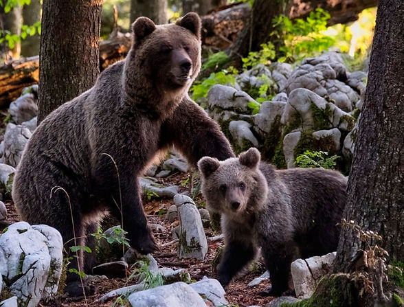 Bears Photo by Marco Secchi on Unsplash.
