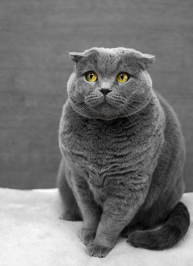 Cat Photo by Max Baskakov on Unsplash.jp