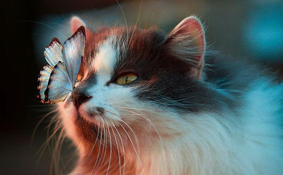 Butterfly Cat.JPG