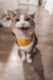 Photo by Jae Park on Unsplash Bandana ca