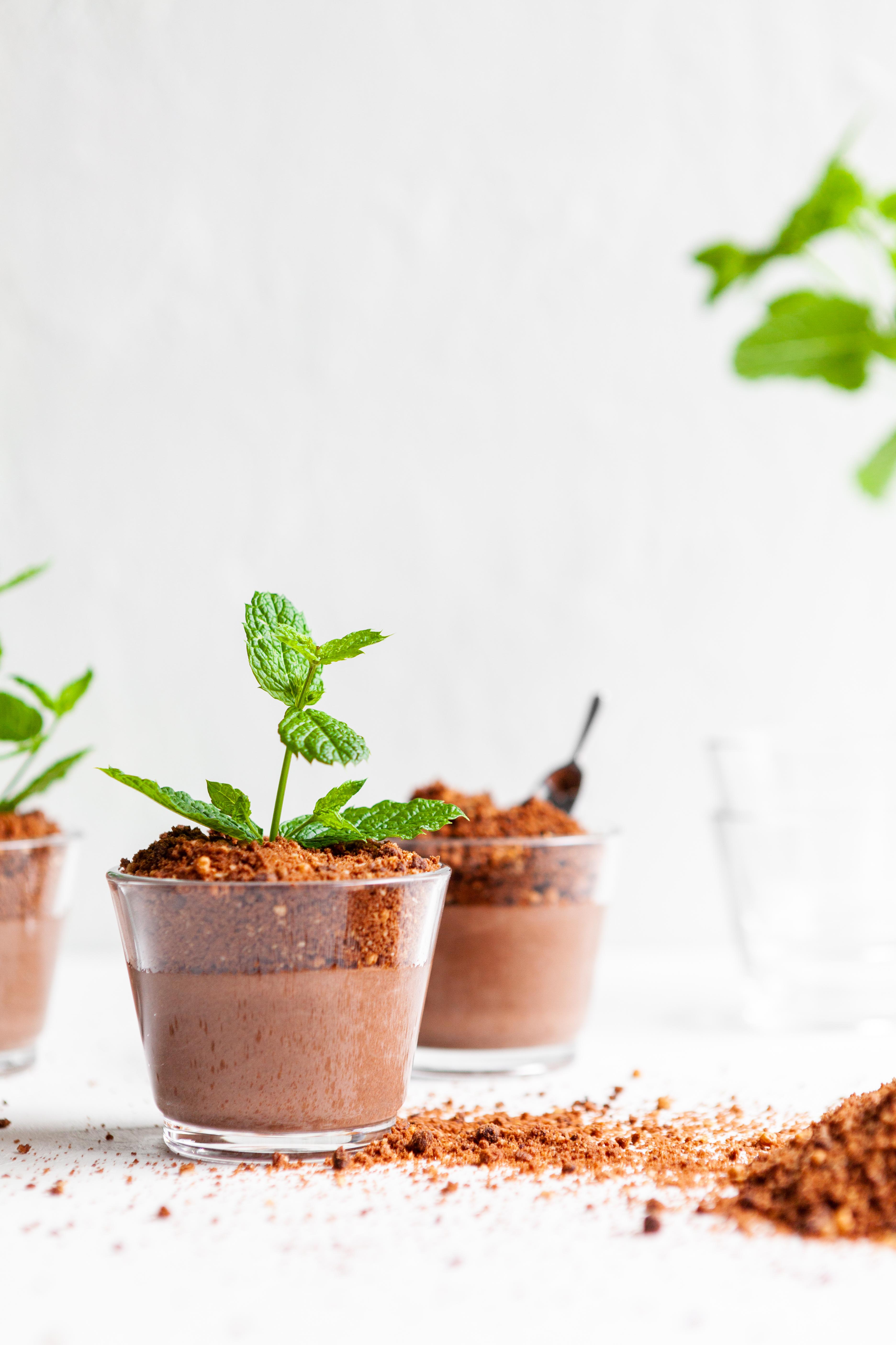 EVA magazine Winter 2019 - vegan voor vleeseters -  puddingplantjes