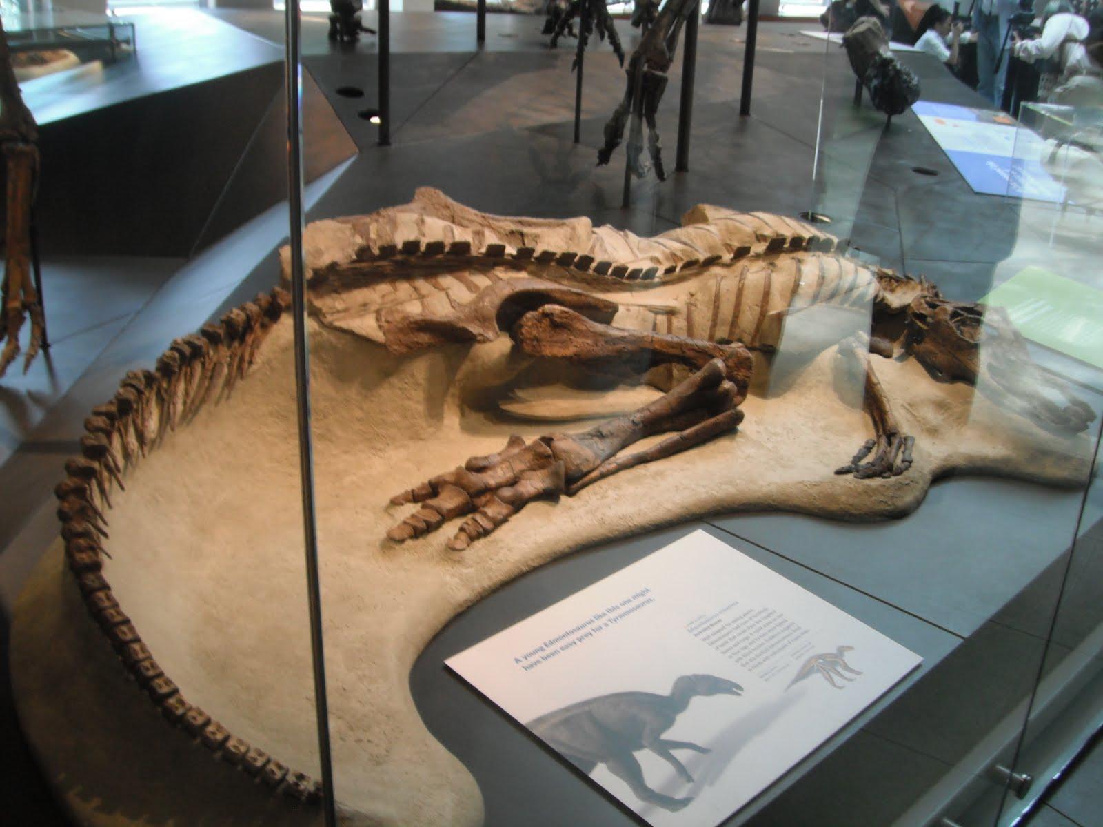 dinosauri storia.jpg