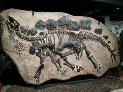 fossili dinosauri.jpg