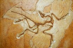 fossili dinosauri ludoteca.jpg