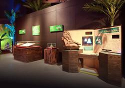 museo dinosauri fossili.jpg