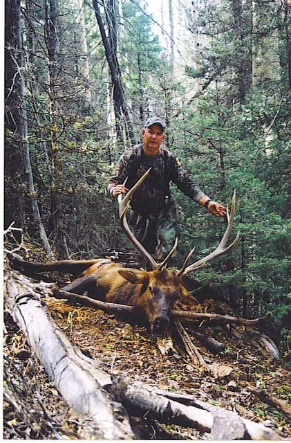 Elk kill