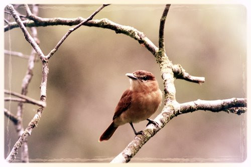 Little Brown Bird
