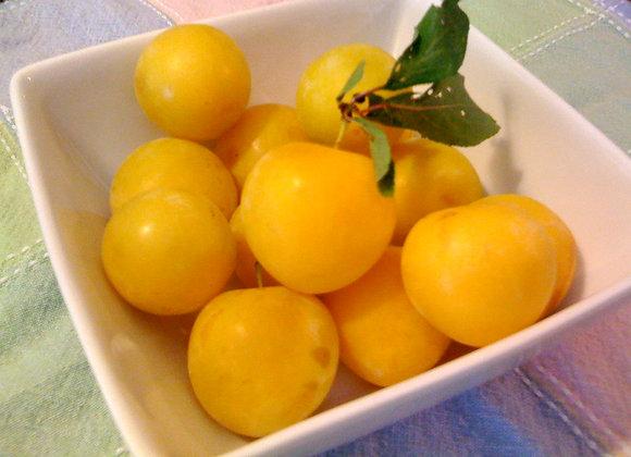 Yellow Plum Jelly