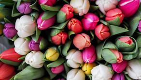 Langage des fleurs : que veulent-elles dire ?