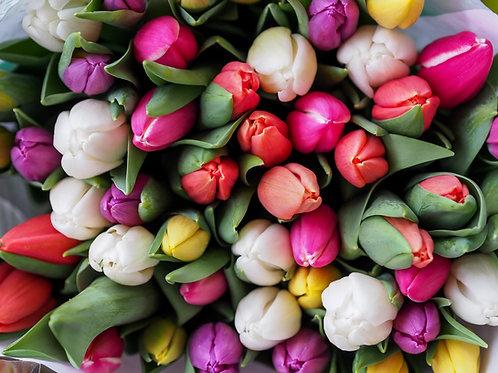 Bulk Mixed Tulip Bulbs