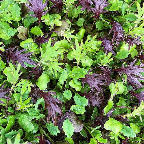 Baby Kale (bagged) 5 oz