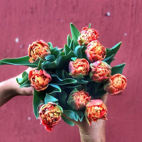 Olivia Double Tulip Bundle