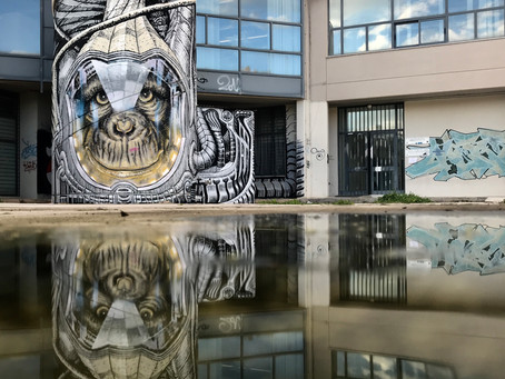 Wild Drawing - Reflections