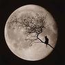 buentarot-tarot-españa-gato-negro-luna.p