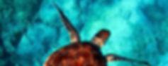 Oceanographe.jpg