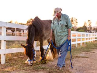 Horse farm fun