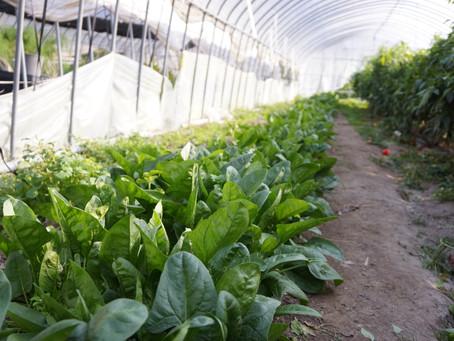 自家製野菜の畑はいつでも見学可能です。