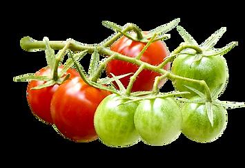プチトマト_s.png