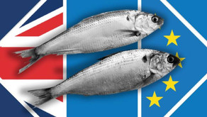 Go Fish: How the Fishing industry shaped Brexit