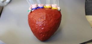 Investigadores crean un prototipo de corazón impreso en 3D con capacidad de bombeo
