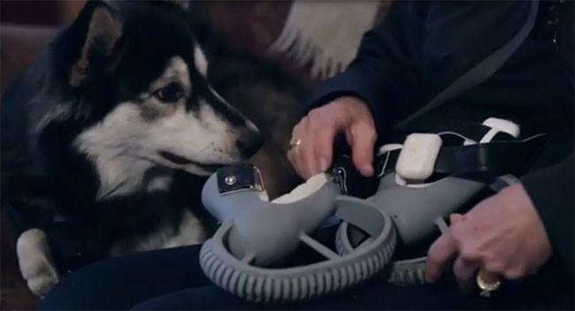 Así es como la impresión 3D ha ayudado a Derby, un perro con malformación en las patas