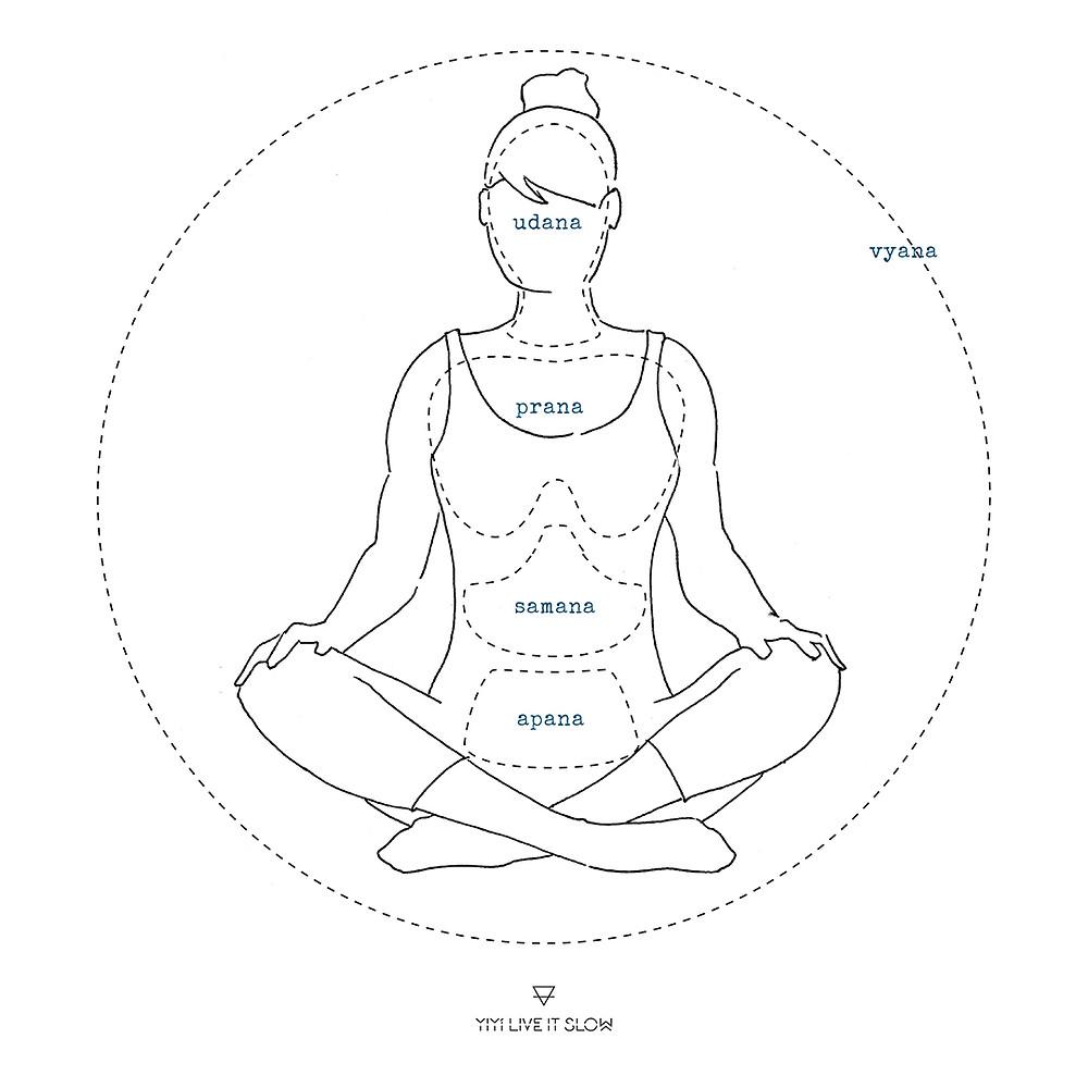 Dibujo de la distribución del prana en el cuerpo vayus  yiyí live it slow yoga
