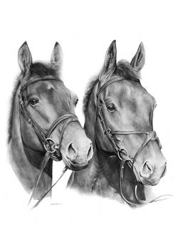 horses pencil