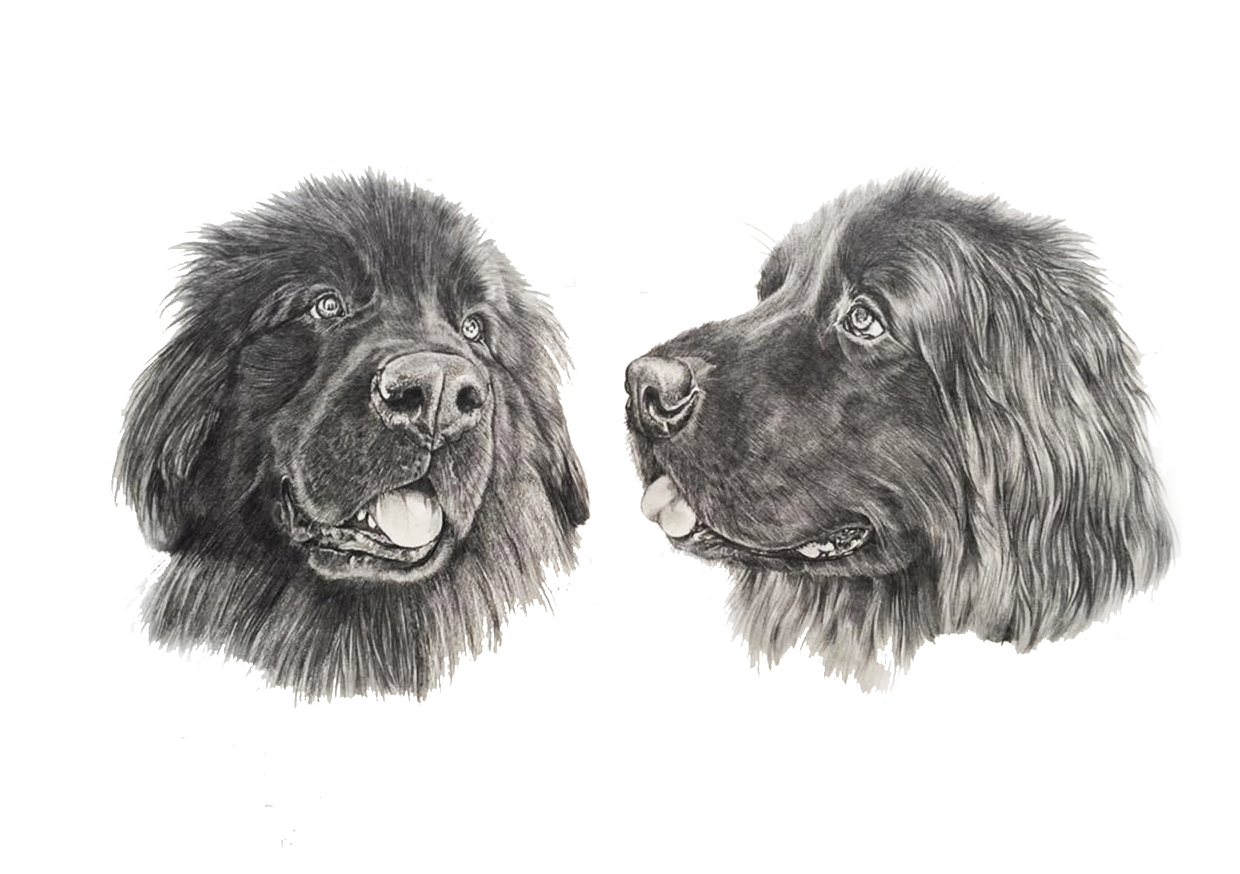 Newfoundlands pencil