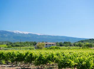 French Riviera Wine: Fayence and Beyond