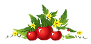 tomato%20plants_edited.png