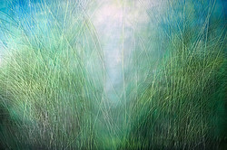 Tall Grasses IV