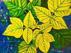 Leaves on Blue Ground
