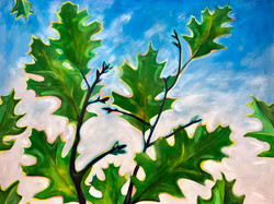 Oak Branches and Sky