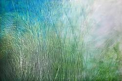 Tall Grasses III