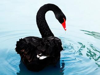 Los cisnes negros