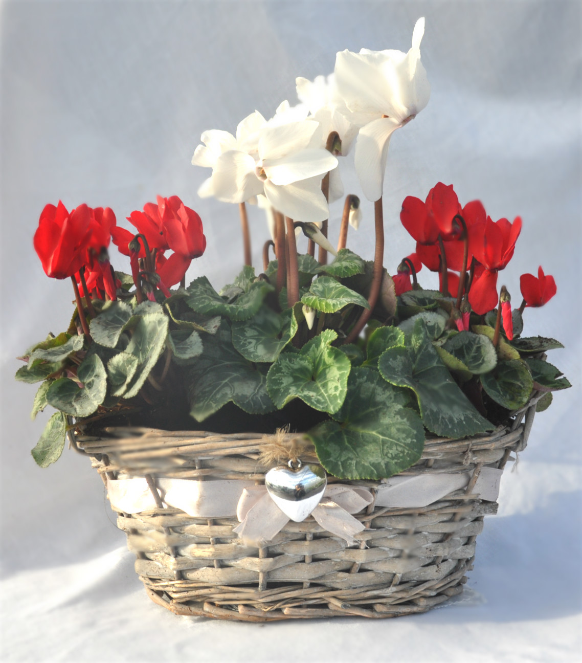 wicker heart basket red and white cyclamen