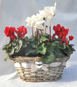 wicker heart basket red and white cyclamen