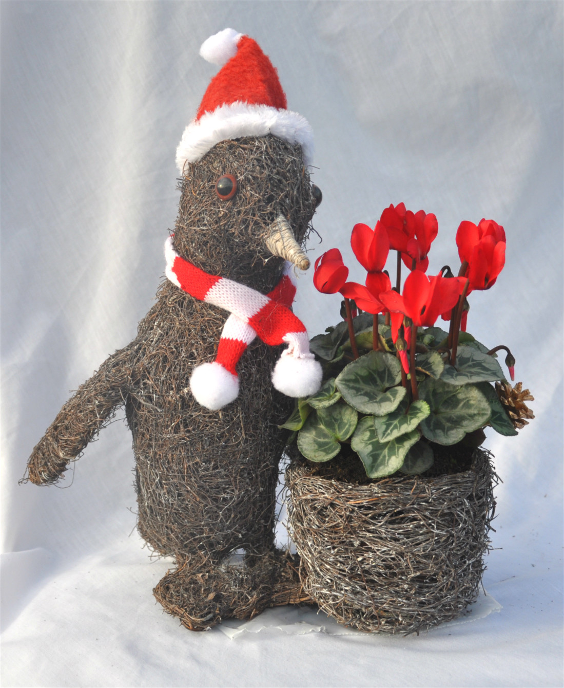 penguin red cyclamen