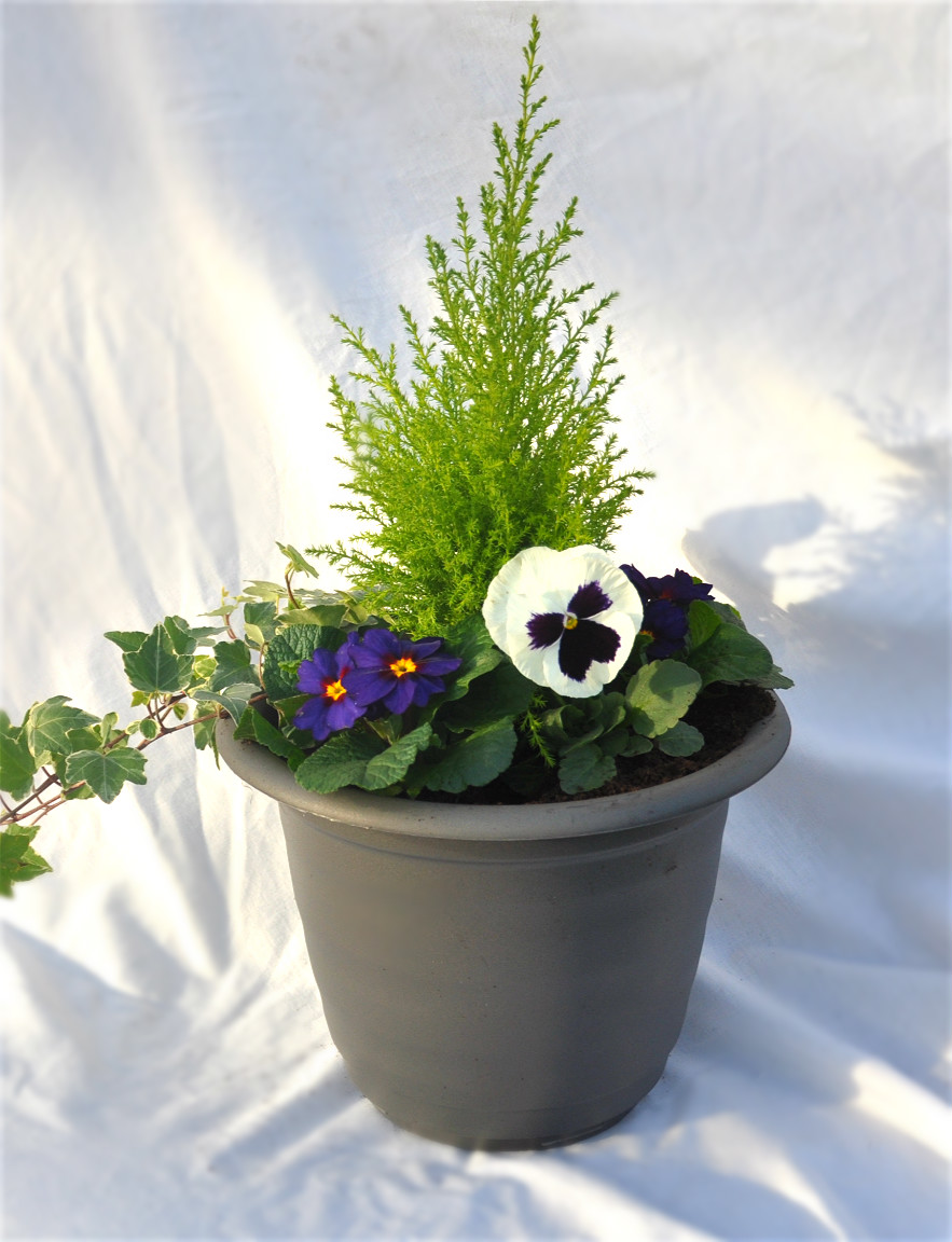 grey planter winter