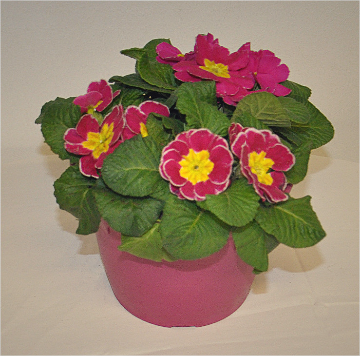 Pink small planter  - Copy