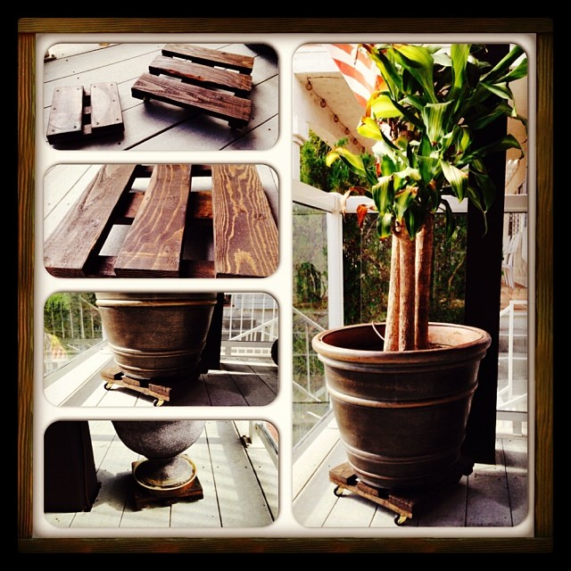plant dollies