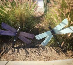 Garden dragonflies #234 #235