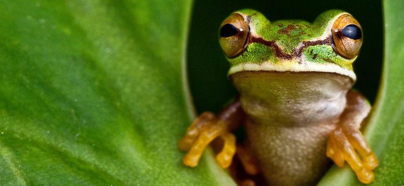 frog-cropped2-IMG_6873.jpg