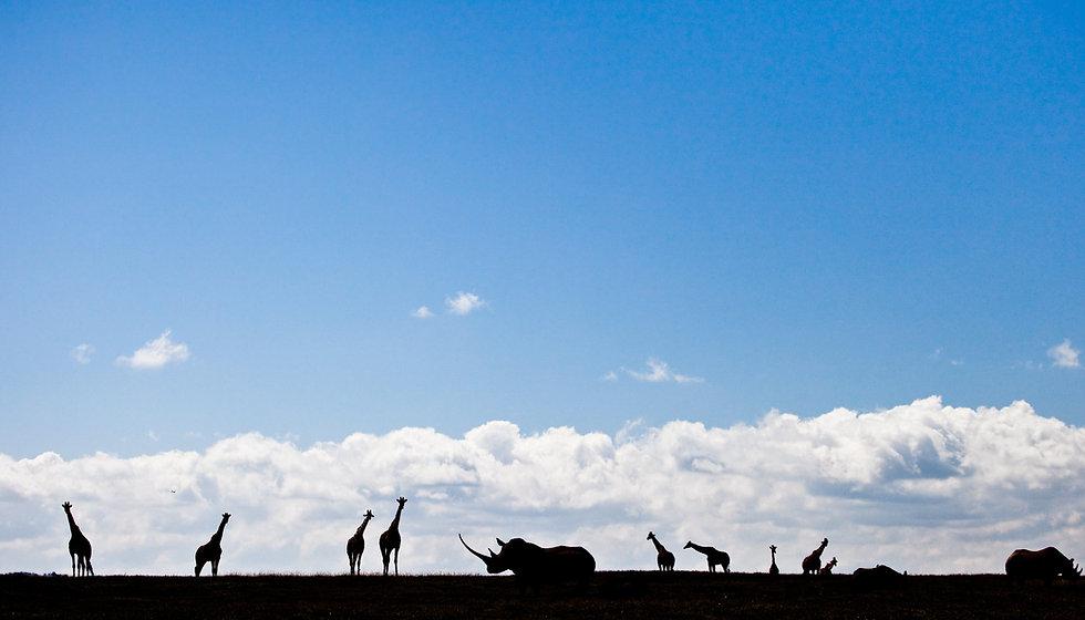 Kenya-5945-resized.jpg