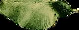 Logo mourah végétal.png