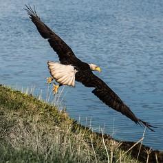 Channel it! Give it wings! Let your spiritual side soar!