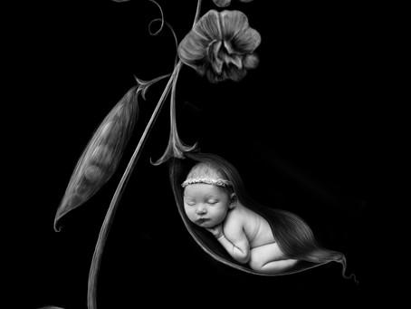 Paxton's Newborn Session - With Jaemie Hillbish Photography.