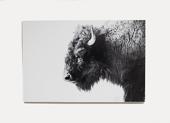 Buffalo - ONLY 1 LEFT