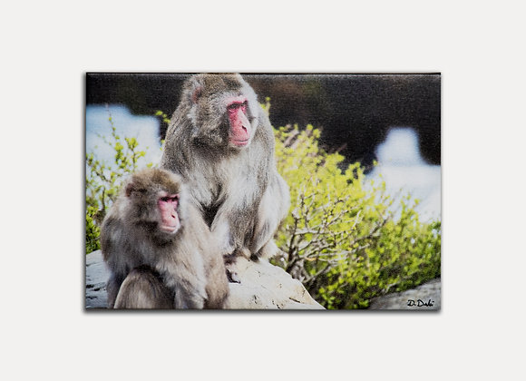 Monkey Rock 4